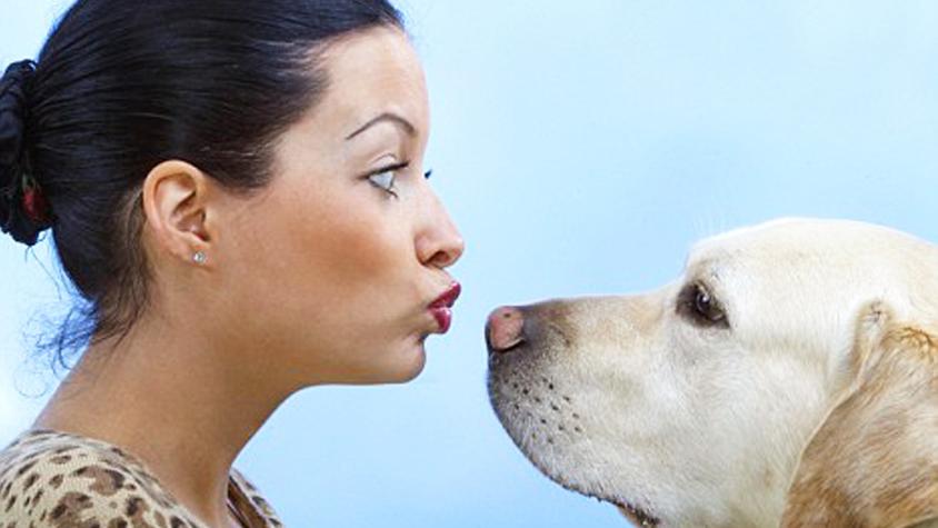 kutyatartas-elonyei-egeszseg