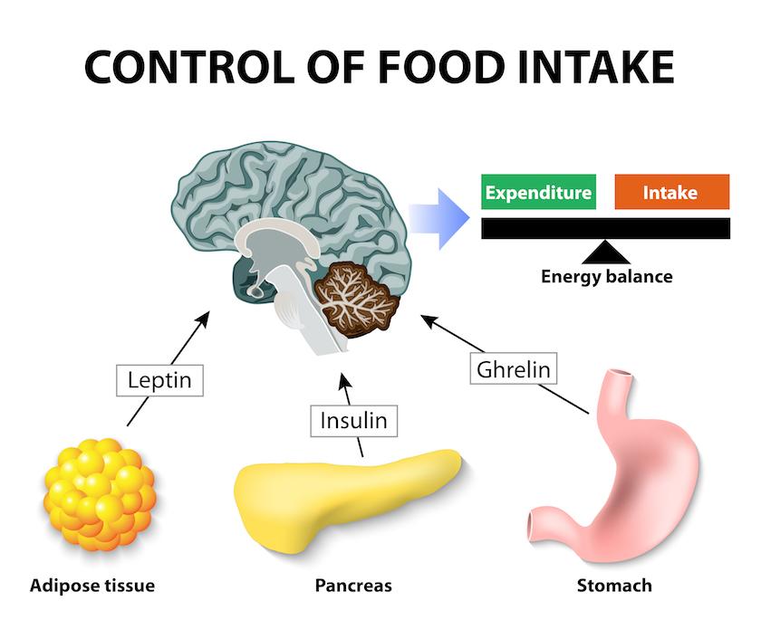 leptin diéta étrend