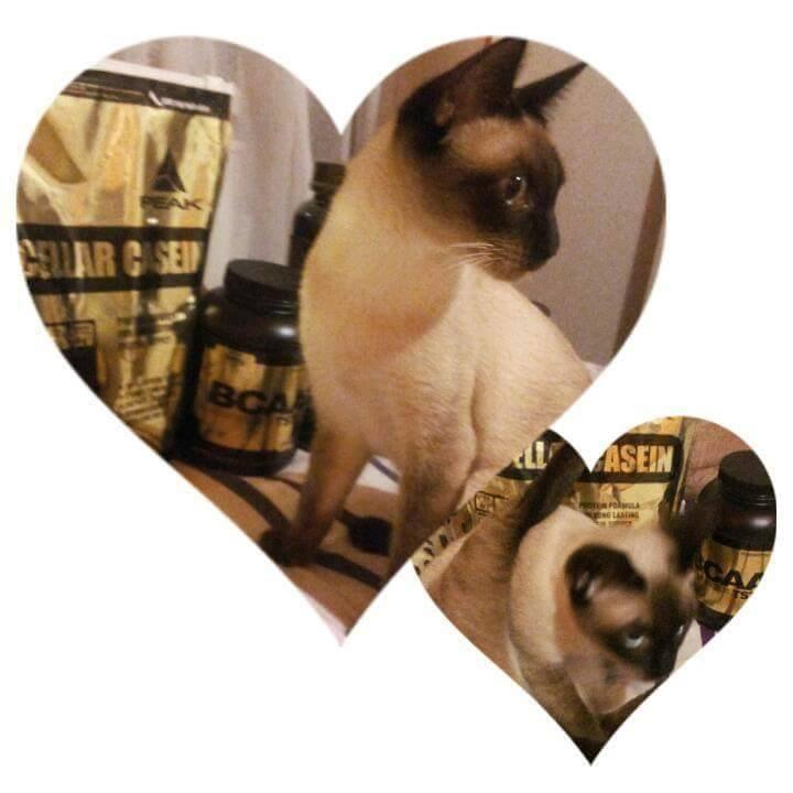 missy-cica