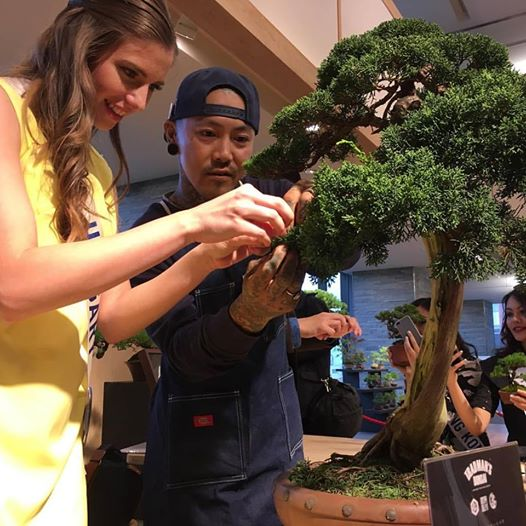 szabo-csillag-bonsai