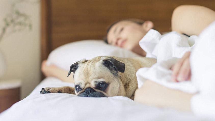 az alvás segíti a zsírvesztést