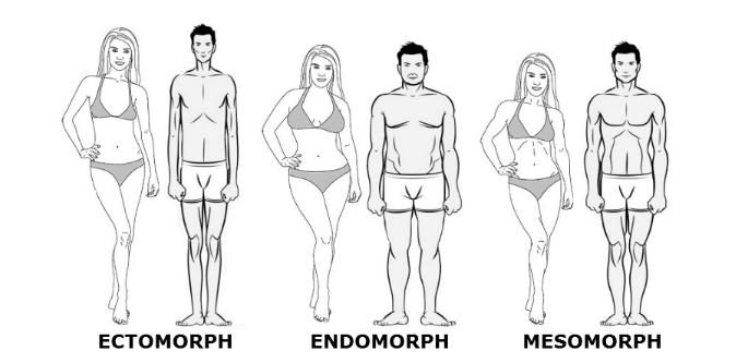 endomorf makro arány a fogyáshoz