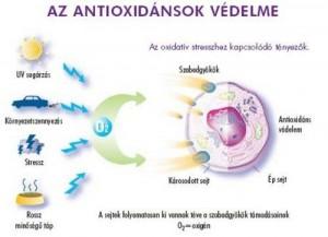 antioxidansok_2
