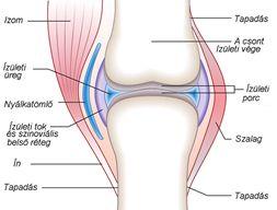 szalagok és ízületi sportok készítményei csípőpótlás után ne érjen fájdalmat
