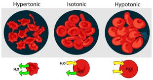 isotonic_hypotonic