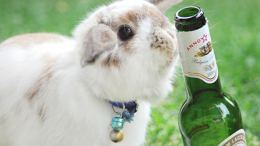 alkohol-majvedelem-meregtelenites