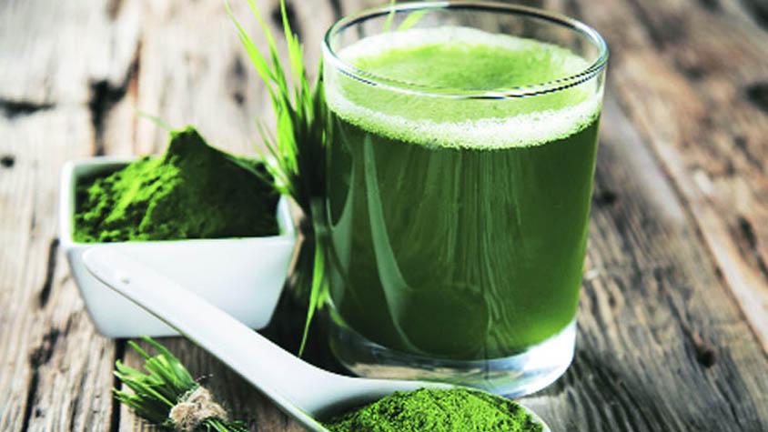 spirulina-alga-hatasa