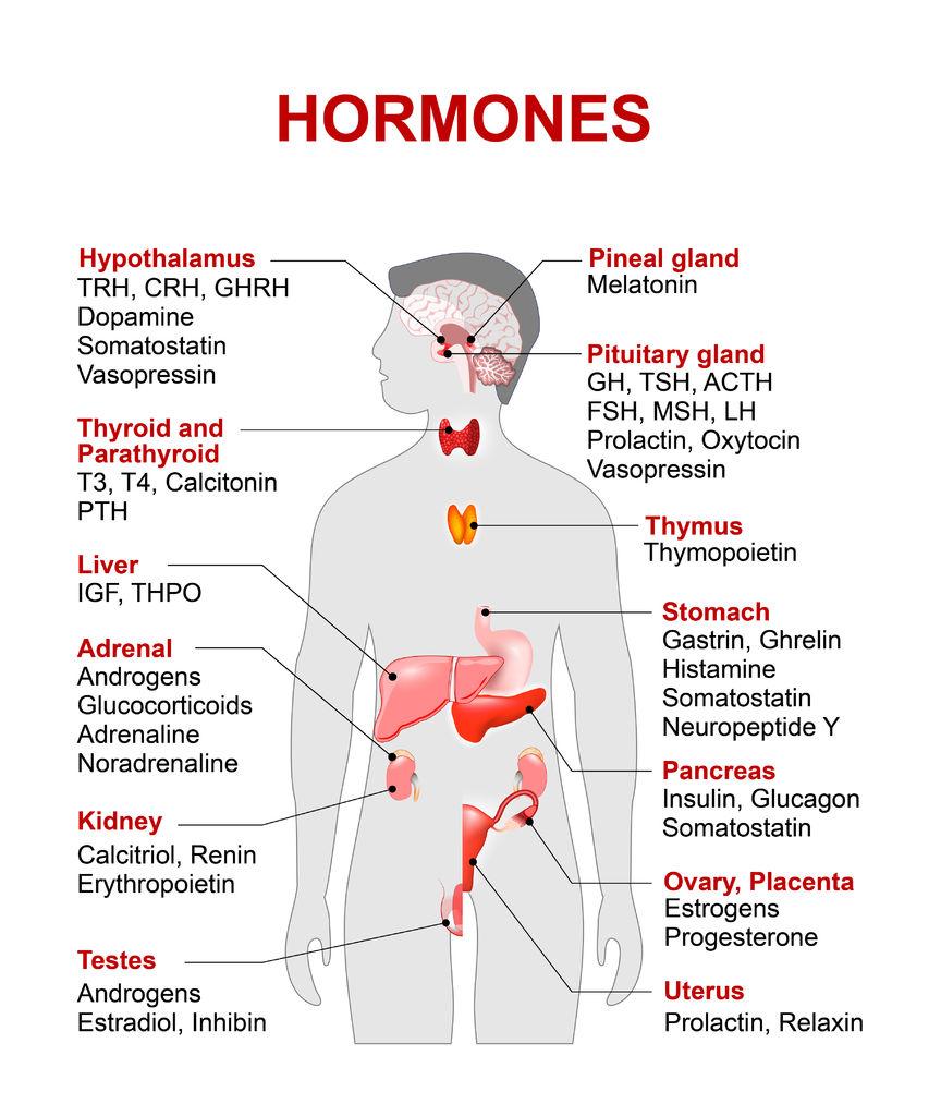 természetes növekedési hormon és fogyás