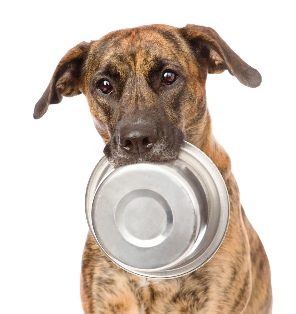 23531576 - dog  holding bowl in mouth  isolated on white background