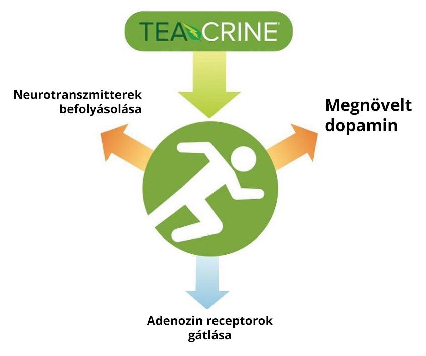 teacrine_adenozin_dopamin