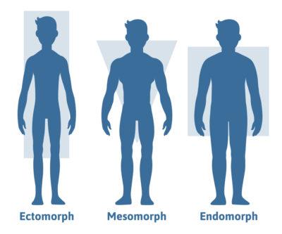 ectomorph_mesomorph_endomorph