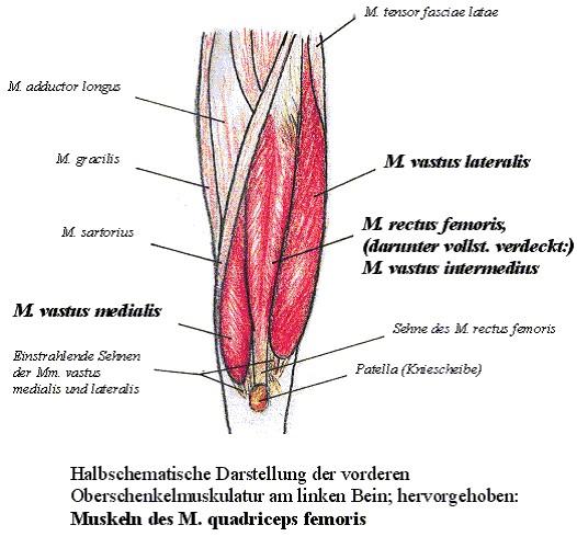 quadriceps_negyfeju_combizom_terd_serules-1