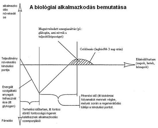 A biológiai alkalmazkodás